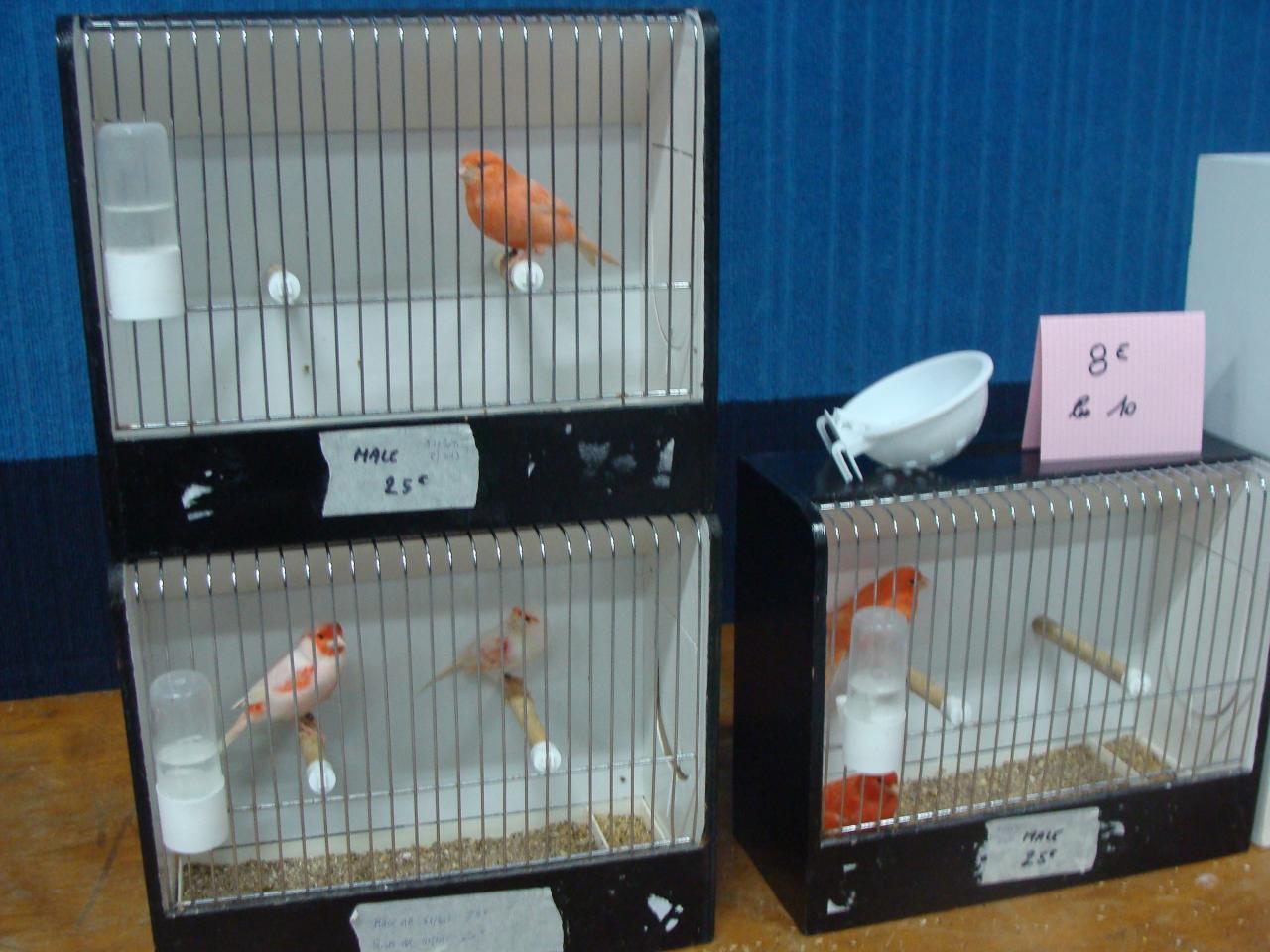Un petit échantillon des oiseaux à céder